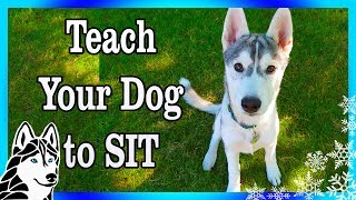 How to teach your dog to SIT , LAY DOWN, and STOP BITING   Dog Training