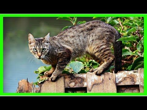 Katzenurin entfernen: Hausmittel gegen Geruch und Flecken