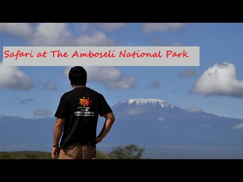 Amboseli Safari - Preview