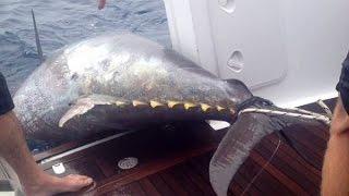 Можно ли поймать тунца в заливе петра великого