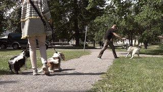 Testa en grej vid hundmöten
