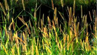 John Fox (United Kingdom) - Willow Weep For Me