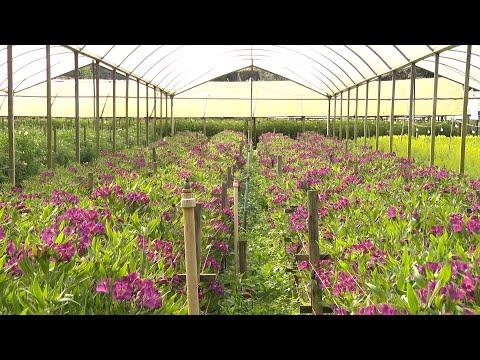 Setor de flor de corte espera recuperação com retomada dos eventos e chegada da primavera