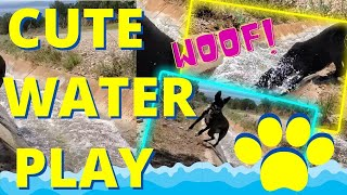 Silly Doggie Water Play for Sadie Girl