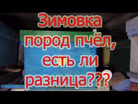 🔥🔥🔥КАК ЗИМУЮТ СРЕДНЕРУССКИЕ ПЧЁЛЫ(УСР), БАКФАСТ И КАРНИКА, ЕСТЬ ЛИ РАЗНИЦА? ОПРЕДЕЛИТЬ ПОРОДУ?🔥
