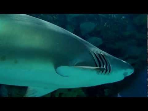 Olympus TOUGH TG-620 víz alatti videó (underwater sample movie)