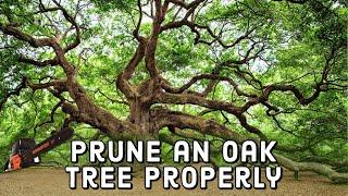 How to Prune an Oak Tree Properly 🌳 | DIY