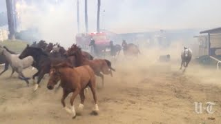 Hundreds of Horses Stampede in Desperate Escape From California Fires