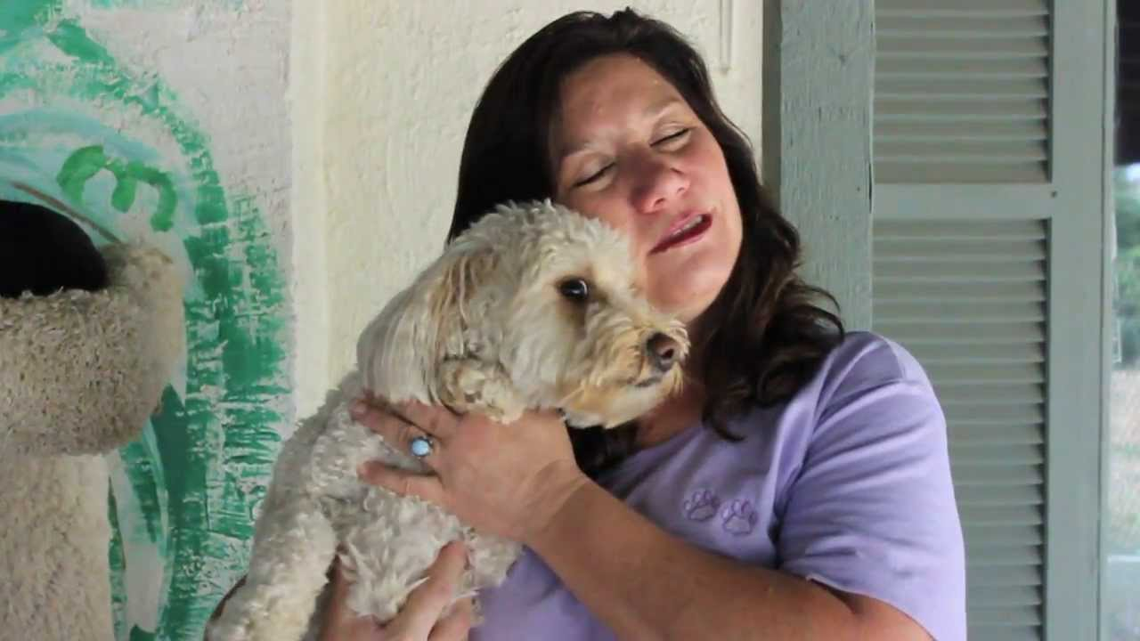 This is a business profile for Judy Jackson who runs a kennel on her property
