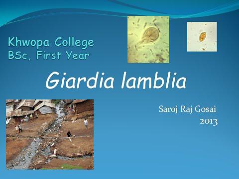 ที่เจ็บโดย Giardia