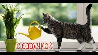 Приколы с котами с ОЗВУЧКОЙ – Мемы 2018 - Смешные коты и кошки -  Domi Show