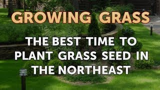The Best Time to Plant Grass Seed in the Northeast