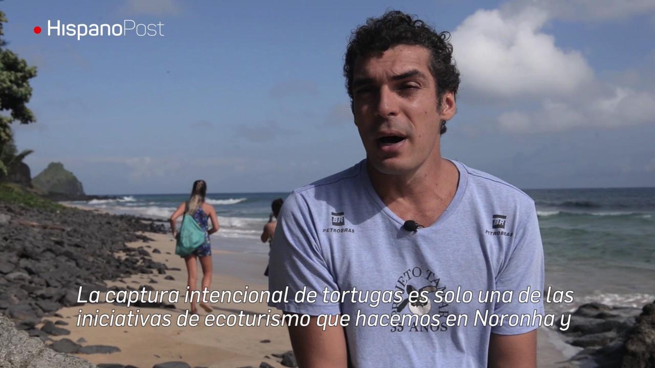 Fernando de Noronha, el paraíso de las tortugas marinas