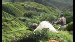 preview picture of video 'Tea plantations, Cameron Highlands'