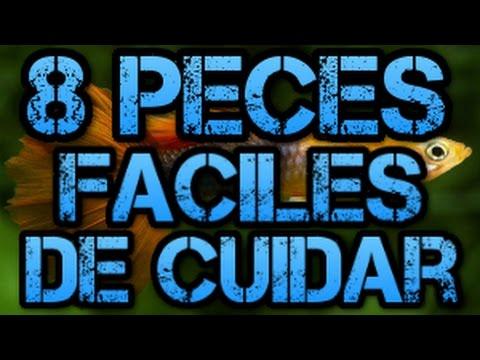 8 Especies de Pez ideales para Principiantes-Rincon animal