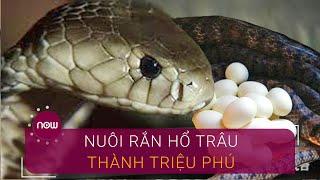 Nuôi rắn hổ trâu: Thanh niên giàu nhất làng | VTC Now
