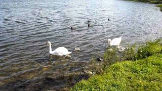 preview picture of video 'Wetlands Llanelli1'