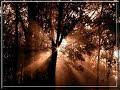 Erdő közepében - Fényes utakon