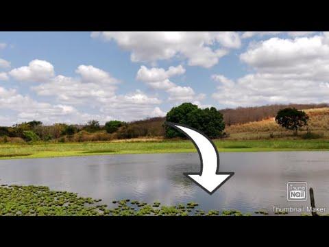 Povoando a Lagoa da Ona....