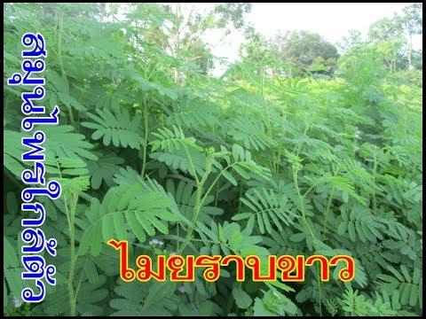 Lіkuvannya varices Cherkasy