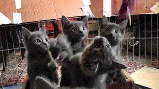 A Den Of Kittens On Animal Planet UK