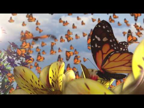 Butterflies Animated Video