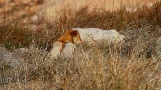 פרסום| כלבי הבר בישראל, הפתרון היחיד הוא להרוג ?!!