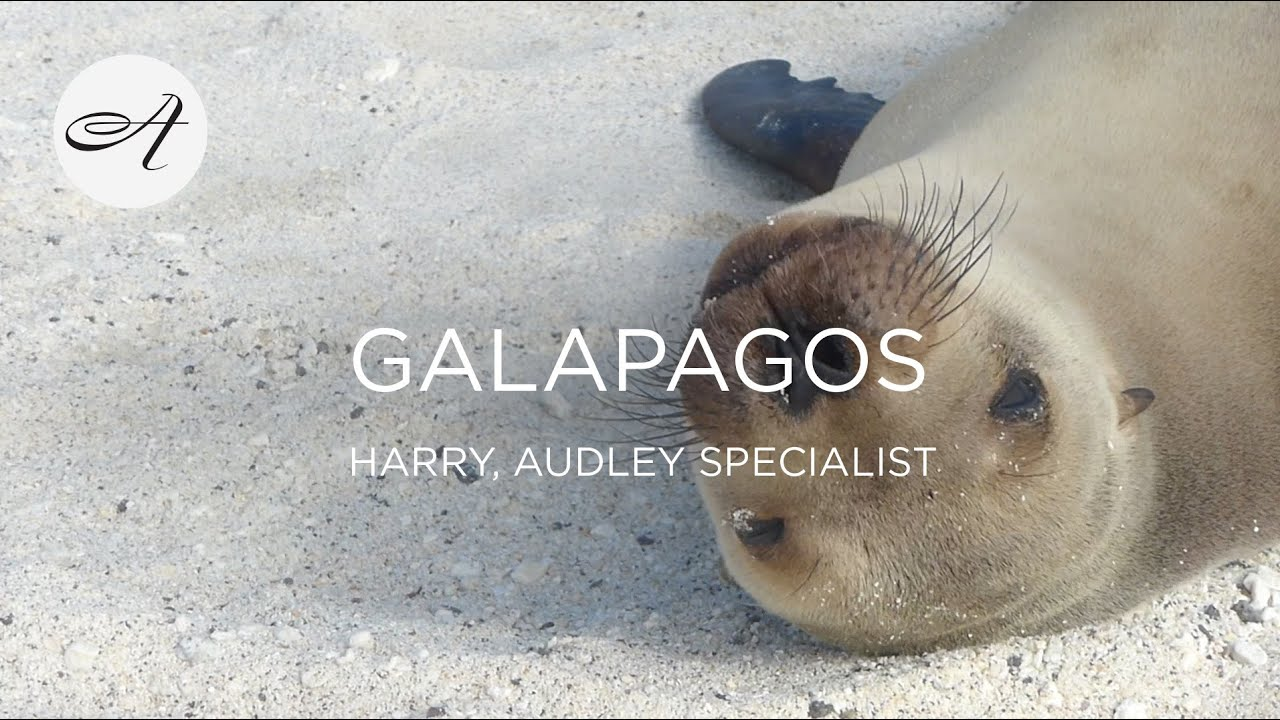 My travels in the Galapagos