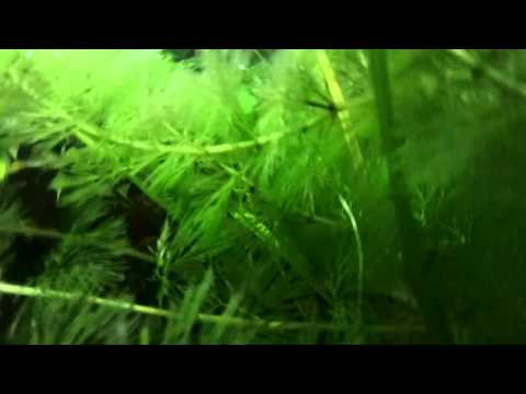 Rollei Camcorder Unterwasser Test