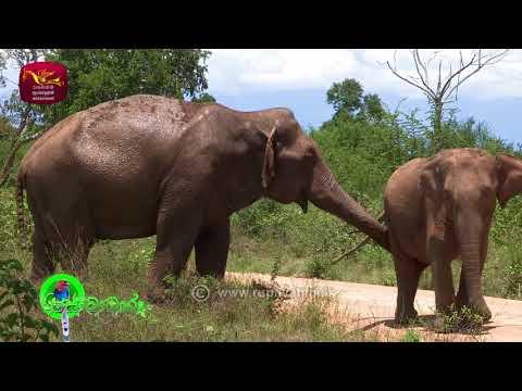 Sobadhara - සොබාධාරා | Season- 02 | Episode- 11 | 2018-03-23 | Rupavahini Documentary