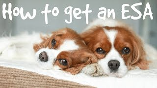 HOW TO REGISTER AN EMOTIONAL SUPPORT ANIMAL (ESA)