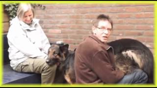 Best Animal Video Sex Dog With Adogy Sexy Funny Video