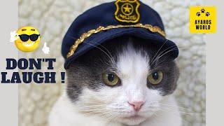 Cute and funny cat videos -Tik Tok #65
