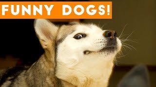 Ultimate FUNNY DOG Compilation | Cute Pets 2017