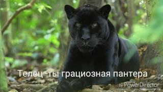 Какое ты хищное животное по знаку Зодиака