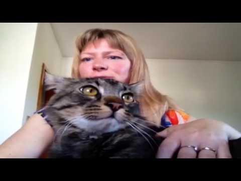 Problemi comportamentali del gatto: spruzzi di urina
