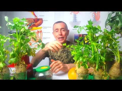 Лечение аденомы простаты петрушкой