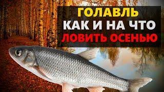 Ловля голавля в октябре на малых реках