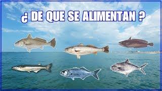 ALIMENTACIÓN NATURAL Y CARNADAS PARA PECES COSTEROS DE MAR