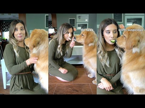 Feeding My Dog By Mouth Challenge