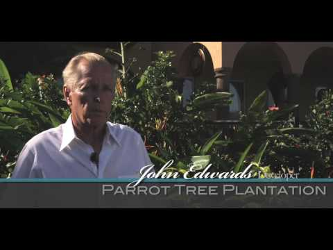 Parrot Tree- Roatan