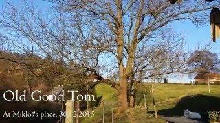 Video Old Good Tom - At Mikloš's place - 30.12.2015
