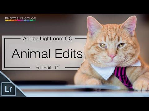 Lightroom 6 tutorial – Edit Animal Photos in Lightroom CC Tutorial
