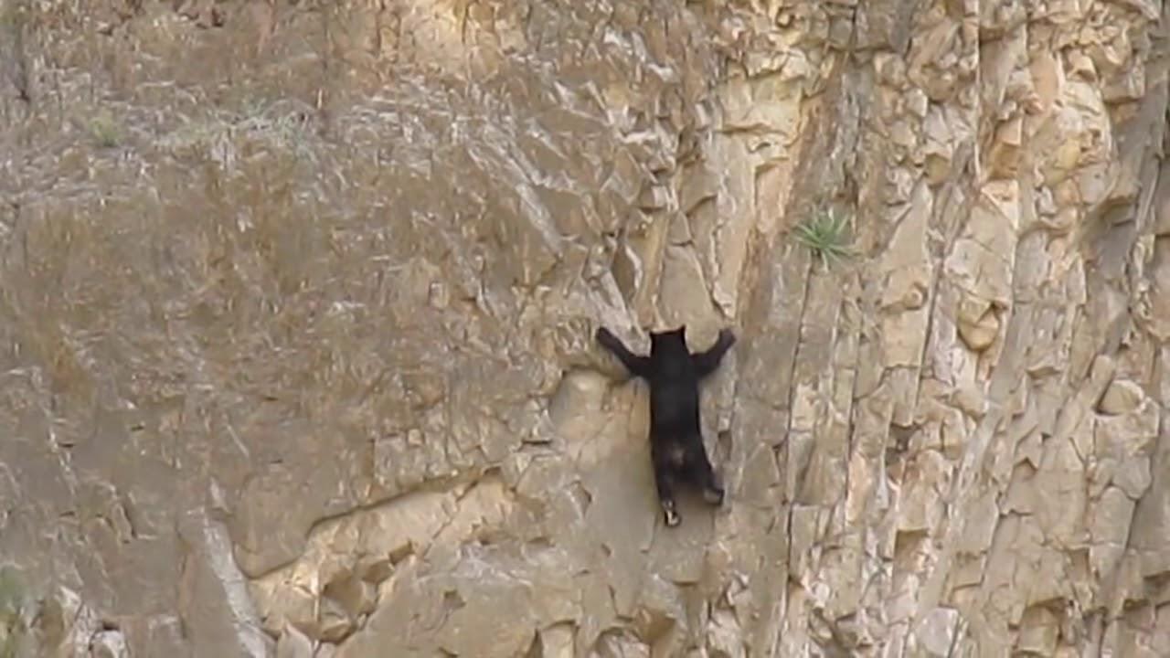 와~우 곰이 바위 넘 잘타네요^^