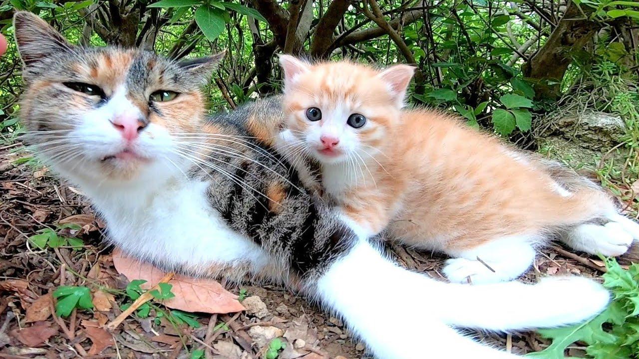 母猫はときどき子猫に話し掛けているようです