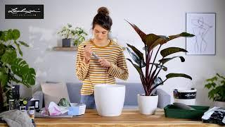 Zimmerpflanzen richtig umtopfen mit LECHUZA