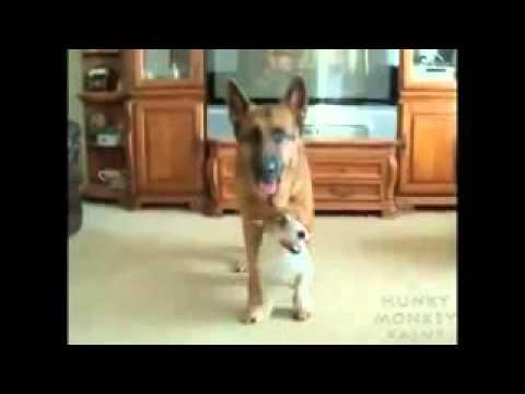 Oppa Doggy Style =]]