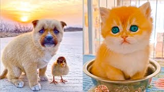 Try Not To Say Aww Challenge (IMPOSSIBLE) 😍🥰😘