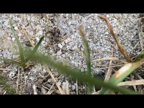 Ants Predict Rain in Toms River, NJ