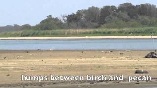 Texas Drought: Lake Somerville the low down